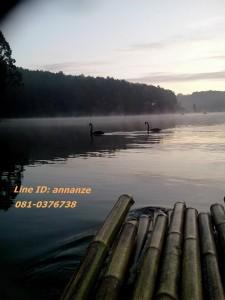 chiangmaivan988426_371914146285643_1237771407_n